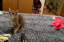 クシャミにビックリする猫