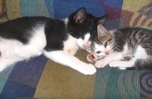 盲目猫と親友猫