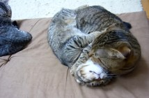 じゃれ合い父猫と子猫