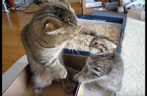 父猫に叱られちゃった子猫ちゃん