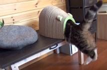吸い込まれる猫