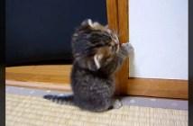しがみつく子猫
