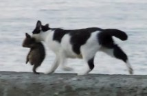 海辺を歩く猫の親子