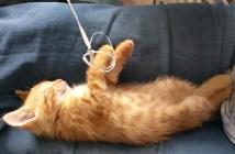 風船を持ったまま眠ってしまった子猫