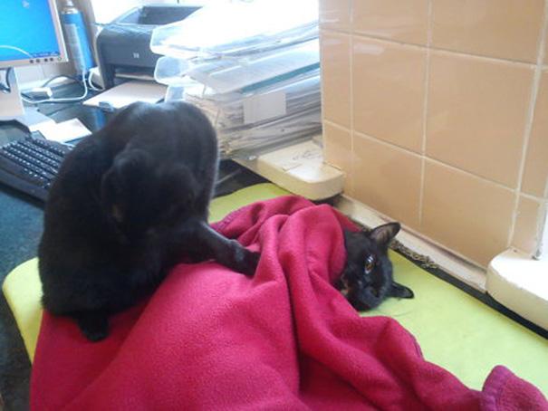 猫を気遣う黒猫