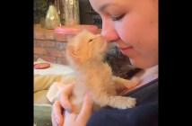 顔を滑らせる子猫