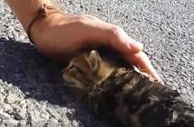 瀕死の子猫に起きた奇跡