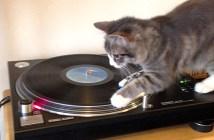 レコードプレイヤーで遊ぶ猫