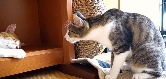 首を長くする猫