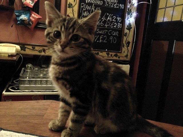 イギリスの猫パブ