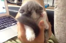 手の中で眠りにつく子猫