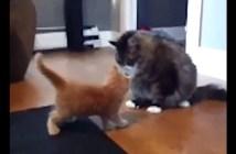 力の差を見せつけられた子猫