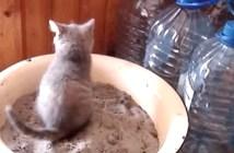 トイレで気張り過ぎちゃった子猫