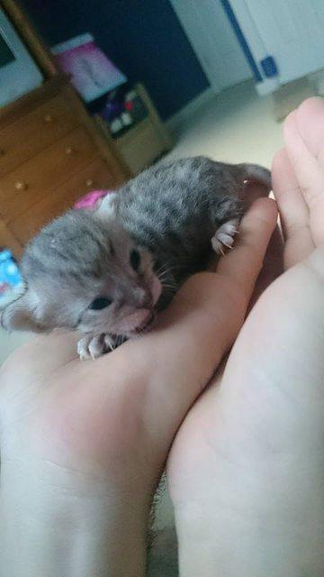 手の上に乗る子猫