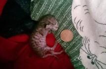40gで生まれた子猫