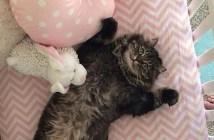 ベッドで横になる猫