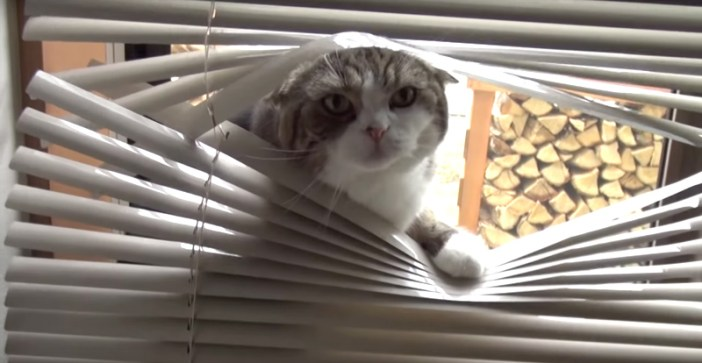 その話聞かせてもらったニャな猫