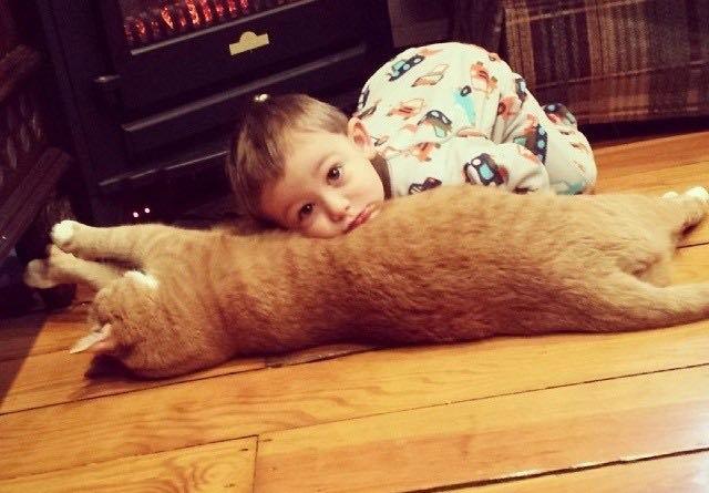 猫を枕にする男の子
