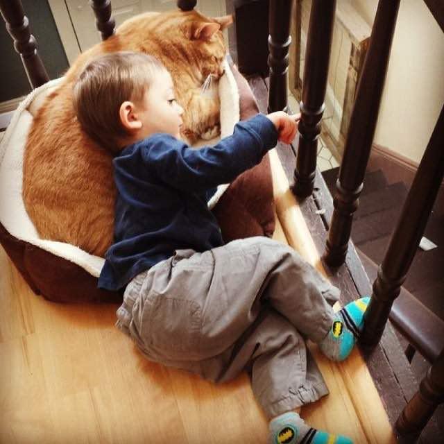 猫とお話しする男の子