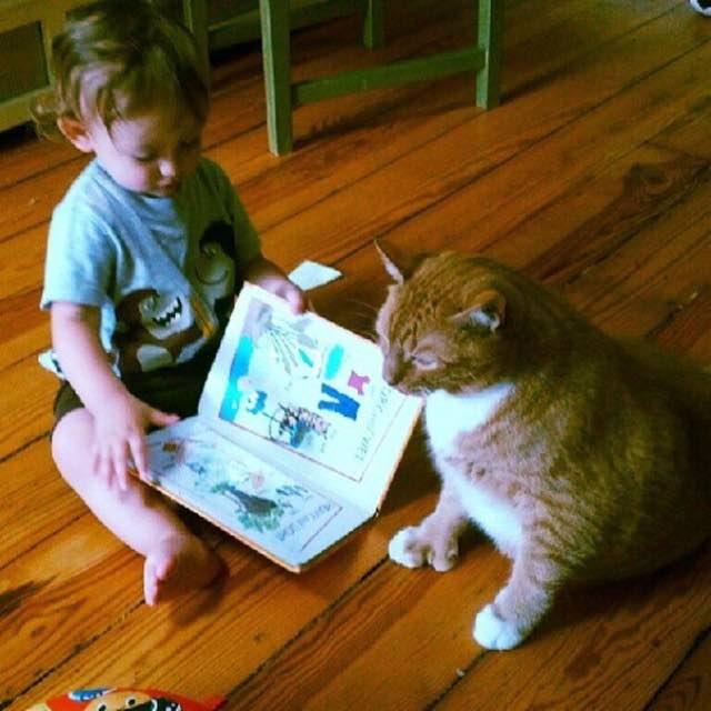 猫と一緒に本を読む男の子