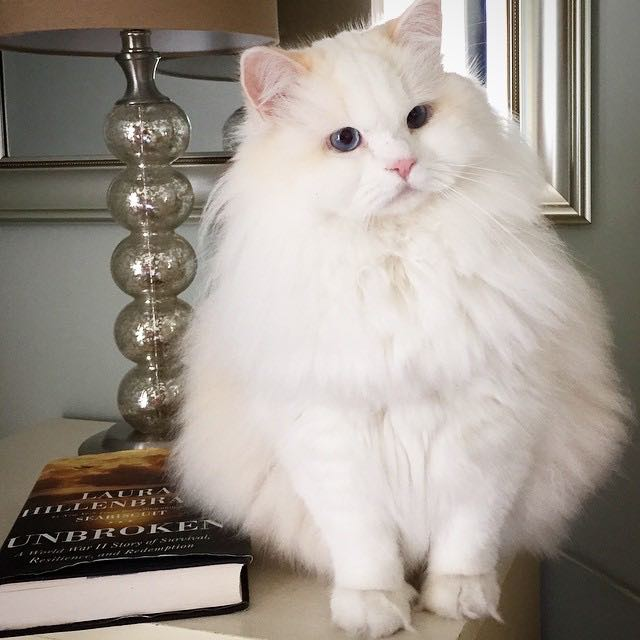 静かに座るモフモフ猫