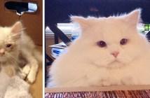 フワフワ猫になった子猫