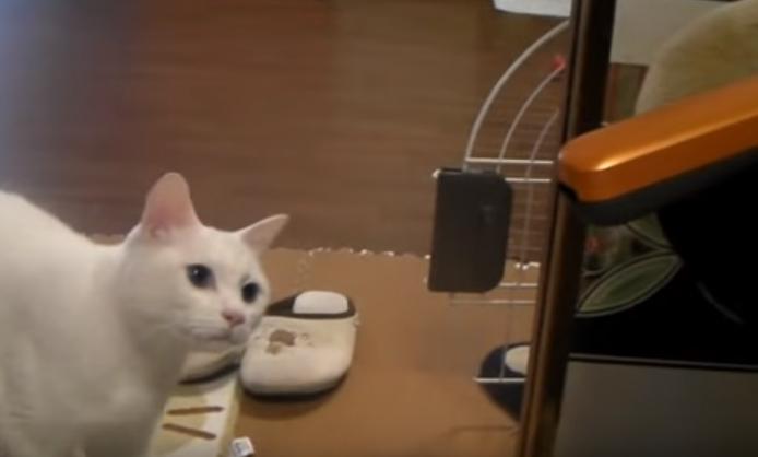 お気に入りのベッドが占領されたことに気づく猫