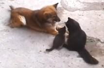 昔からの親友に我が子を紹介する猫