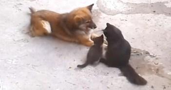 犬と猫の親子