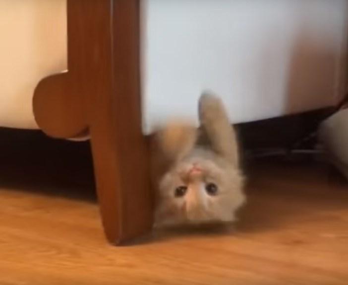 ソファーの下から出てくる猫