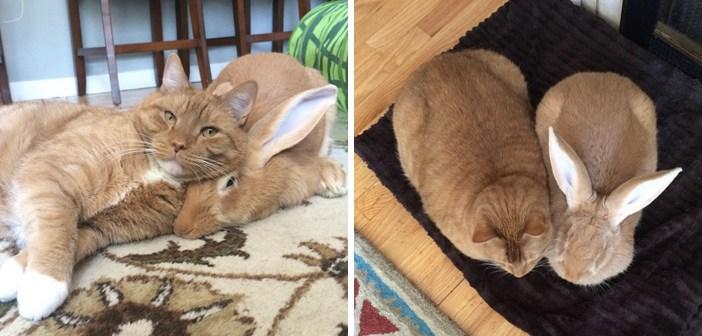 まるで双子のような猫とウサギ