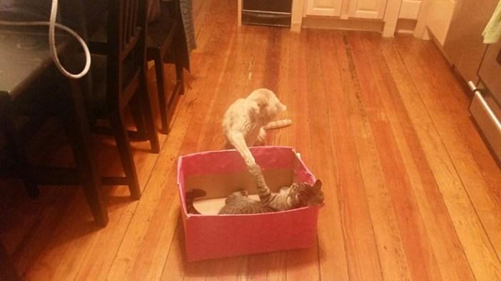 猫と遊ぶティガー