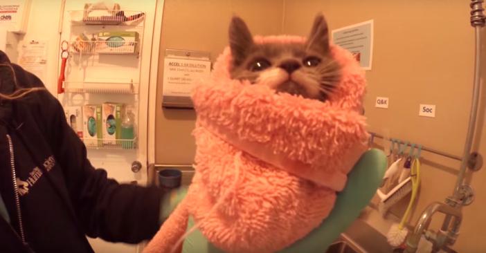子猫を包む