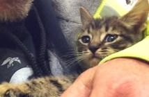 33時間で救出された子猫