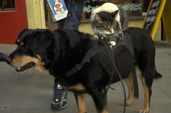 いつもいっしょの犬と猫とネズミ