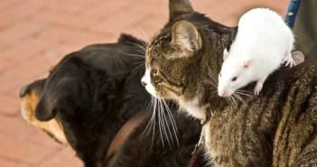 犬と猫とネズミといっしょに旅をする男性