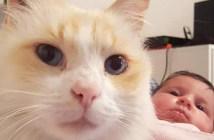 赤ちゃんをボディーガードする猫