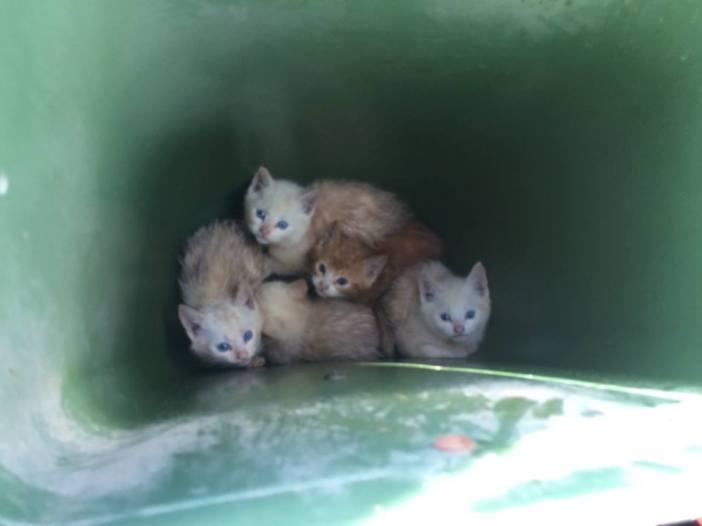 ゴミ箱の中から見つかった子猫