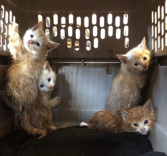 保護されたばかりの子猫