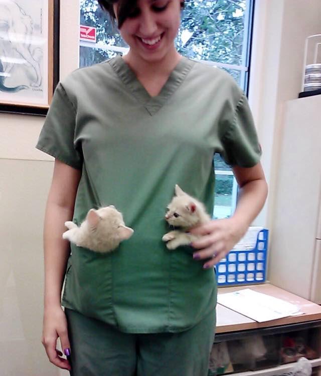 獣医さんと2匹の猫