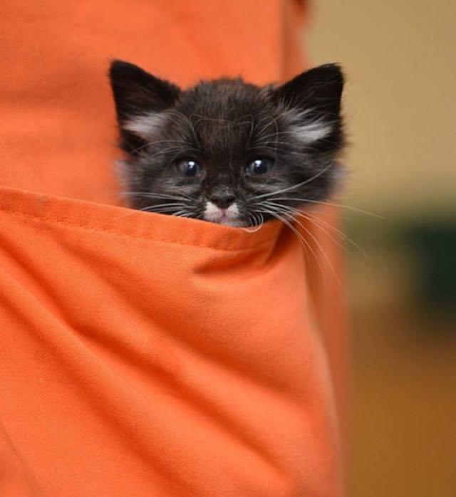 ポケットから顔を出す子猫