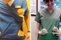 子猫をポケットに入れる獣医さん
