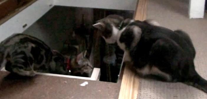 階段を降りる練習をする猫