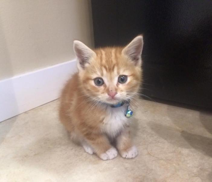 新しい子猫