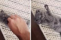 コチョコチョパッする子猫