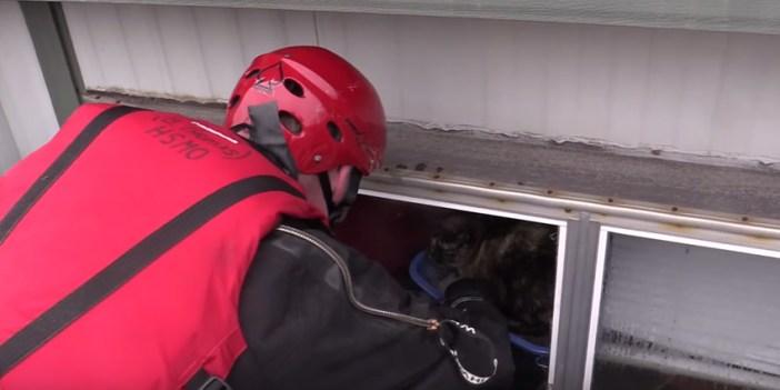 洪水で沈んだ家から猫を助ける男性