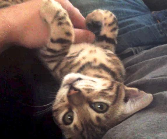 幸せな子猫