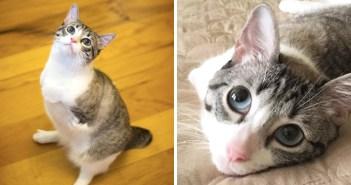 前足の無い猫ルー