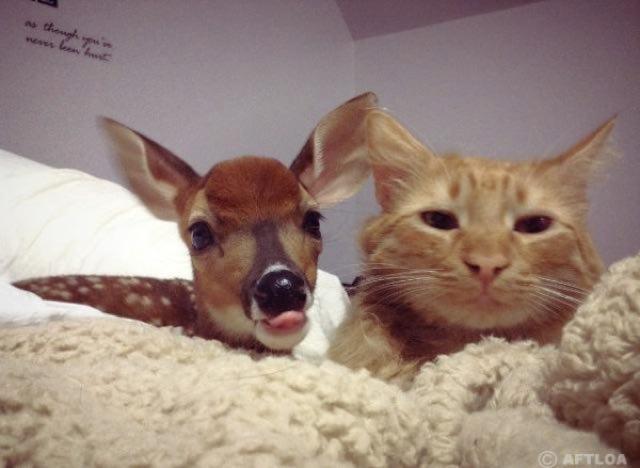 子鹿といっしょの猫