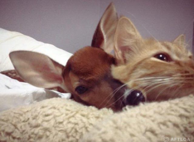 幸せそうな子鹿と猫
